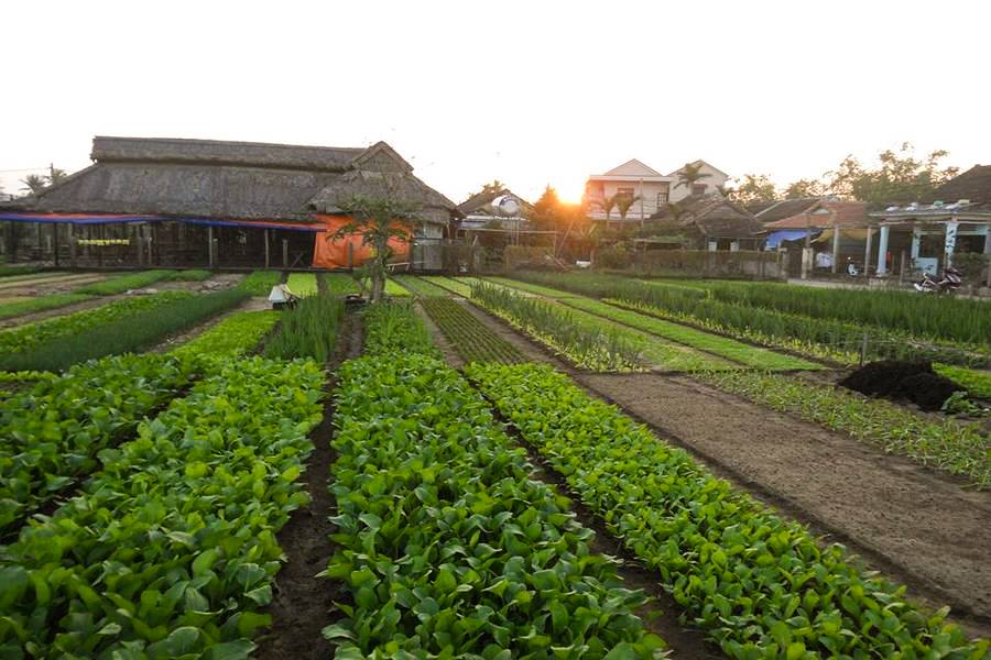 Experiences Tra Que Vegetable Village & Cooking Class